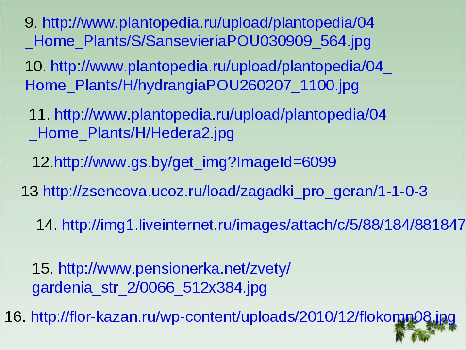 9. http://www.plantopedia.ru/upload/plantopedia/04 _Home_Plants/S/Sansevieria...