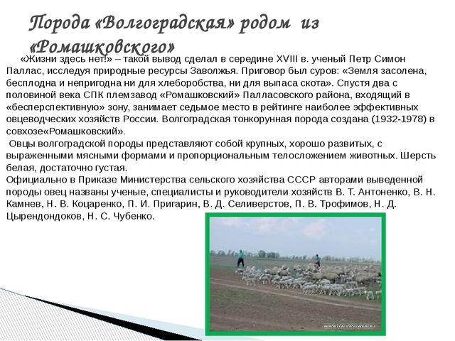 Порода «Волгоградская» родом из «Ромашковского» «Жизни здесь нет!» – такой вы...
