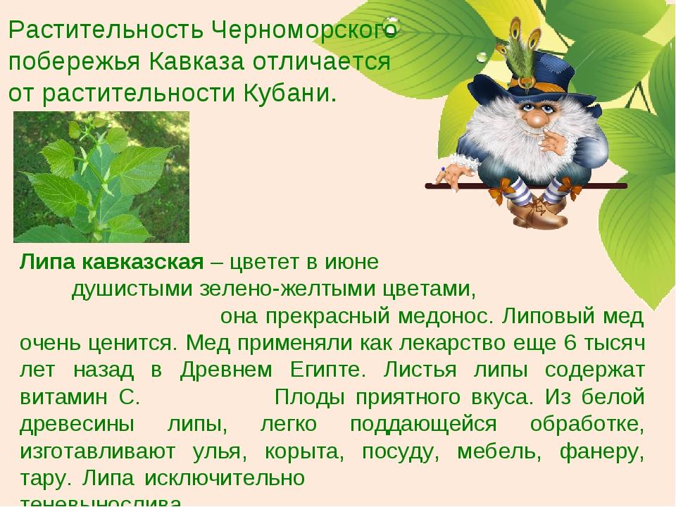 Растительность Черноморского побережья Кавказа отличается от растительности К...