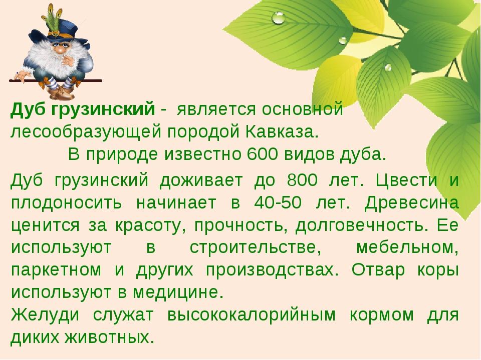Дуб грузинский доживает до 800 лет. Цвести и плодоносить начинает в 40-50 лет...