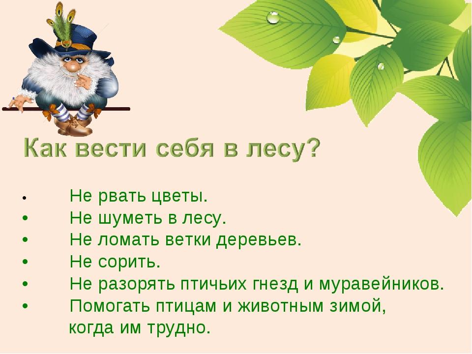 •Не рвать цветы. •Не шуметь в лесу. •Не ломать ветки деревьев. •Не сорить...