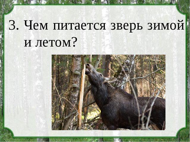 3. Чем питается зверь зимой и летом?