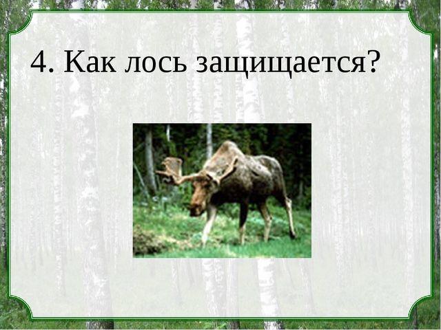 4. Как лось защищается?