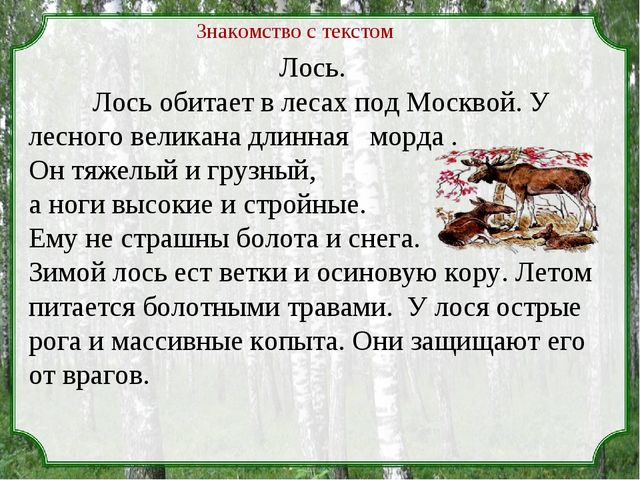 Лось. Лось обитает в лесах под Москвой. У лесного великана длинная морда . О...