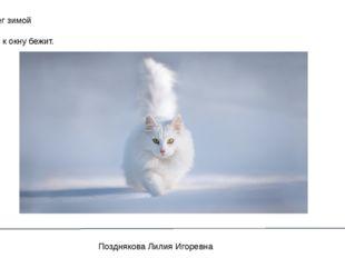 Белый снег зимой лежит, Белый кот к окну бежит. Позднякова Лилия Игоревна