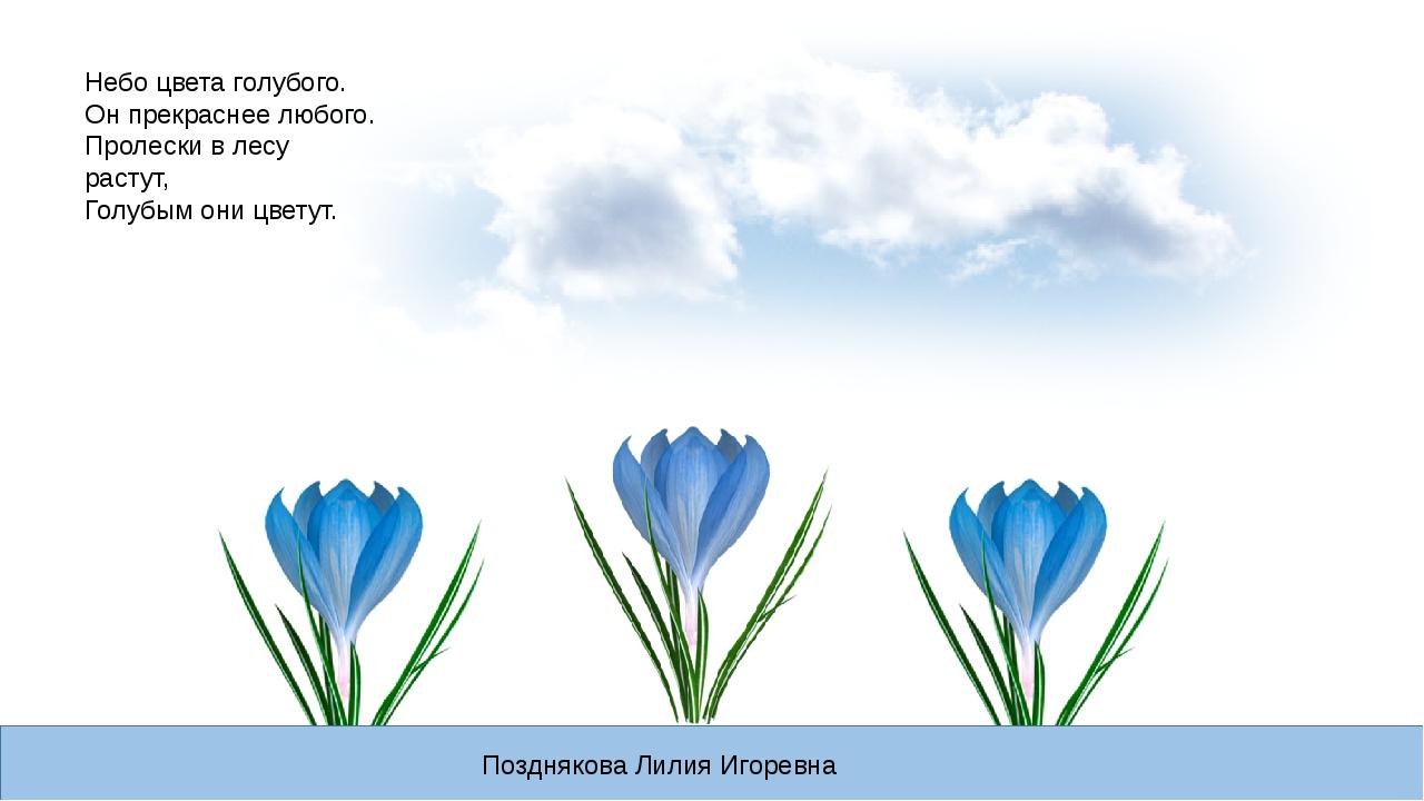Небо цвета голубого. Он прекраснее любого. Пролески в лесу растут, Голубым он...