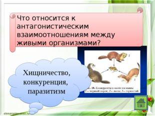 Что относится к антагонистическим взаимоотношениям между живыми организмами?