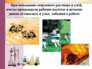 При попадании спиртового раствора в улей, пчелы прекращали рабочие вылеты и
