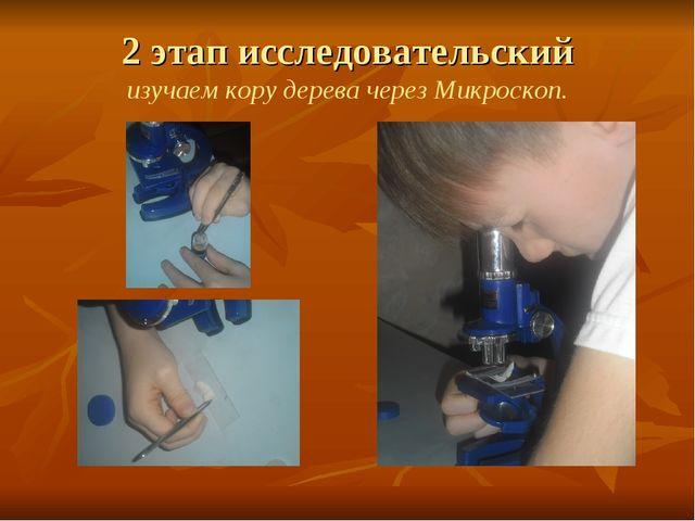 2 этап исследовательский изучаем кору дерева через Микроскоп.