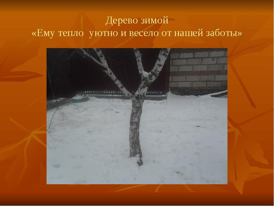 Дерево зимой «Ему тепло уютно и весело от нашей заботы»