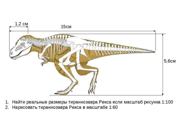 1,2 см 15см 5,6см Найти реальные размеры тираннозавра Рекса если масштаб рису...