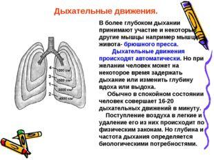В более глубоком дыхании принимают участие и некоторые другие мышцы например