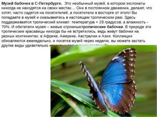 Музей бабочек в С-Петербурге. Это необычный музей, в котором экспонаты никогд