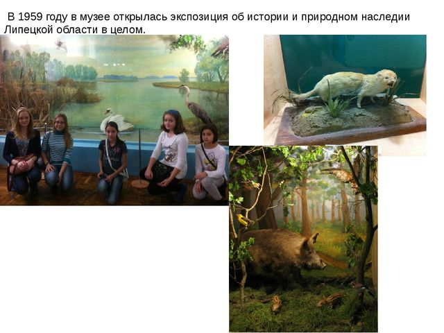 В1959 годув музее открылась экспозиция об истории и природном наследии Лип...