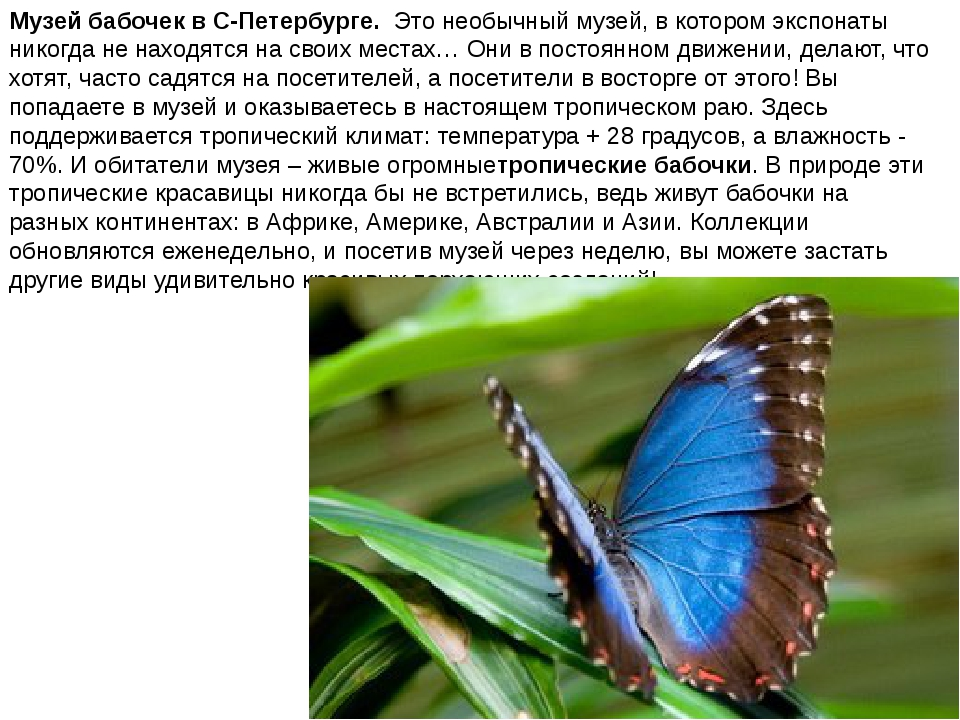 Музей бабочек в С-Петербурге. Это необычный музей, в котором экспонаты никогд...