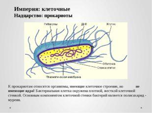 К прокариотам относятся организмы, имеющие клеточное строение, но не имеющие