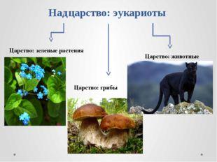 Надцарство: эукариоты Царство: зеленые растения Царство: грибы Царство: живот