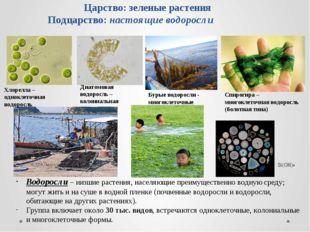 Царство: зеленые растения Подцарство: настоящие водоросли Водоросли – низшие