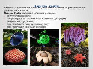 Царство: грибы Грибы – эукариотические организмы, сочетающие в себе некоторые