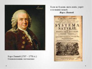 Карл Линней (1707 – 1778 гг.) Основоположник систематики Если не будешь знать