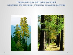 Определите, к какой группе растений (споровые или семенные) относятся указанн