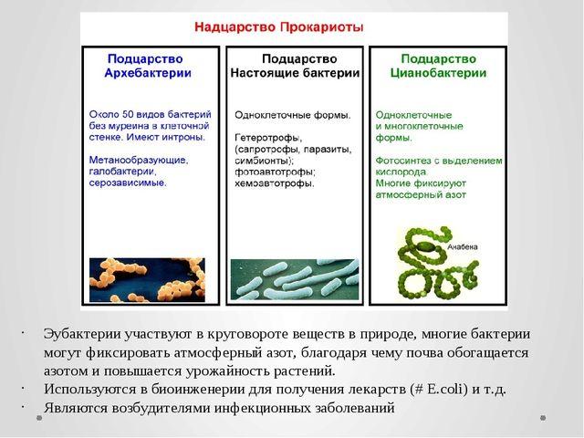 Эубактерии участвуют в круговороте веществ в природе, многие бактерии могут ф...