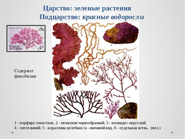 Царство: зеленые растения Подцарство: красные водоросли 1 - порфира лопастная...