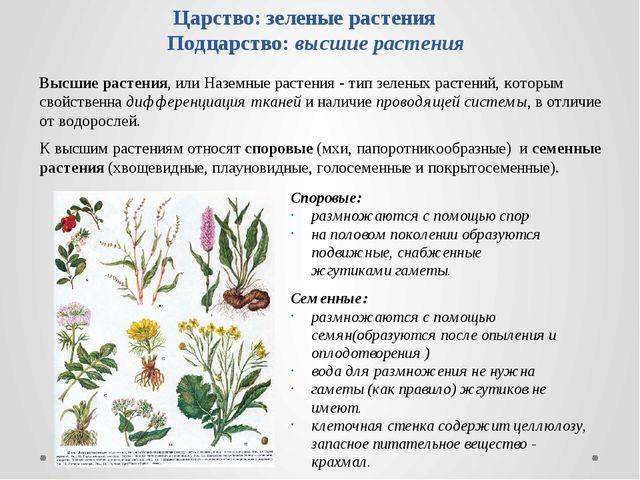Царство: зеленые растения Подцарство: высшие растения Высшие растения, или На...