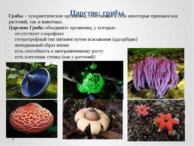 Царство: грибы Грибы – эукариотические организмы, сочетающие в себе некоторые...