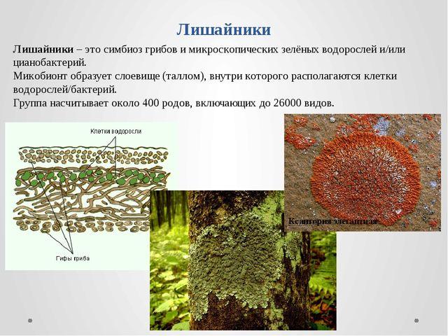 Лишайники Лишайники – это симбиоз грибов и микроскопических зелёных водоросле...
