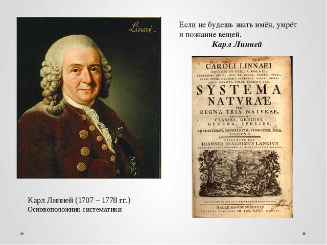 Карл Линней (1707 – 1778 гг.) Основоположник систематики Если не будешь знать...