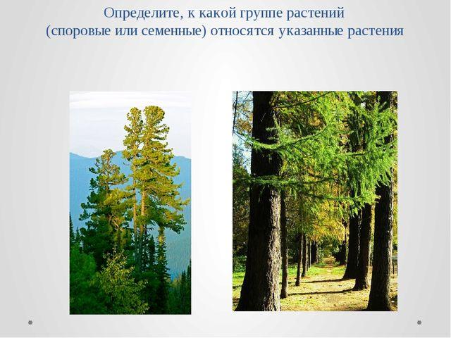 Определите, к какой группе растений (споровые или семенные) относятся указанн...