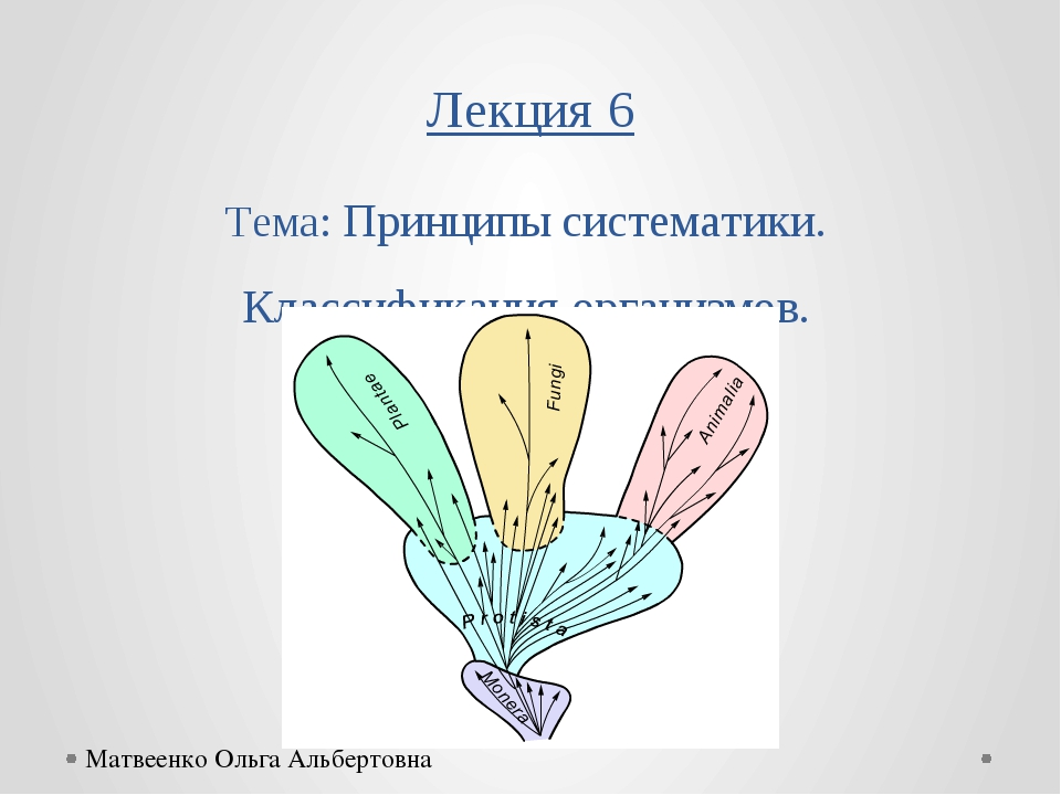 Лекция 6 Тема: Принципы систематики. Классификация организмов. Матвеенко Ольг...