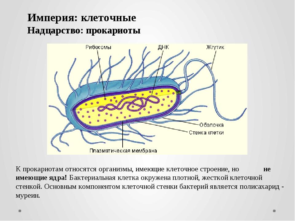 К прокариотам относятся организмы, имеющие клеточное строение, но не имеющие...