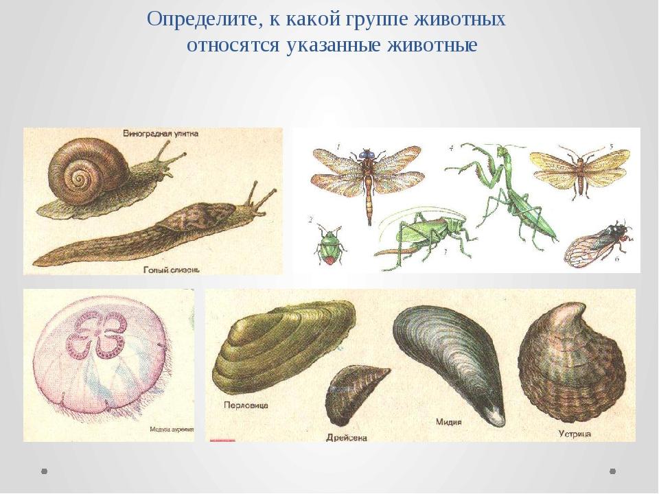 Определите, к какой группе животных относятся указанные животные