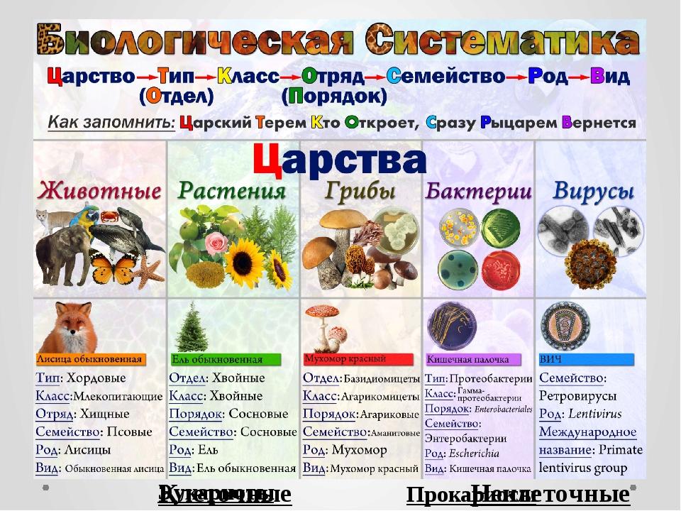 Неклеточные Клеточные Прокариоты Эукариоты