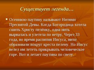 Существует легенда… Осеннюю паутину называют Нитями Пресвятой Девы. Когда Бог