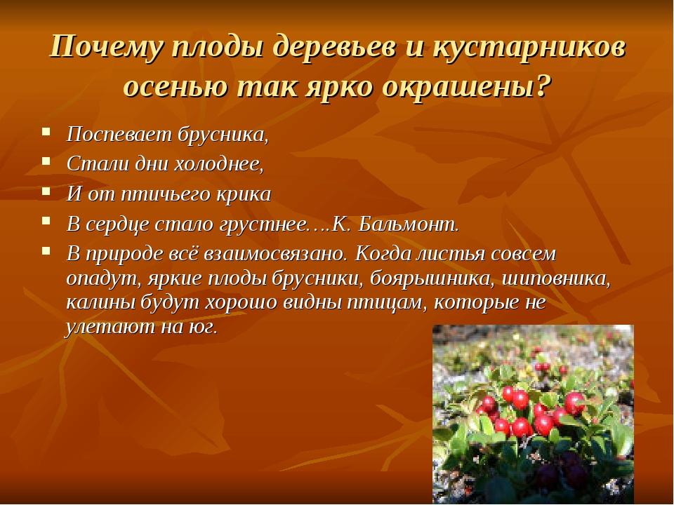 Почему плоды деревьев и кустарников осенью так ярко окрашены? Поспевает брусн...