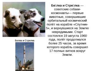 Бе́лка и Стре́лка— советские собаки-космонавты— первые животные, совершившие