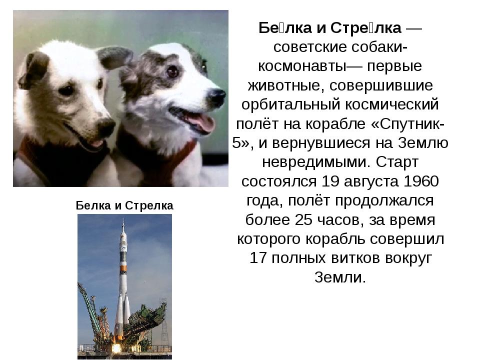 Бе́лка и Стре́лка— советские собаки-космонавты— первые животные, совершившие...