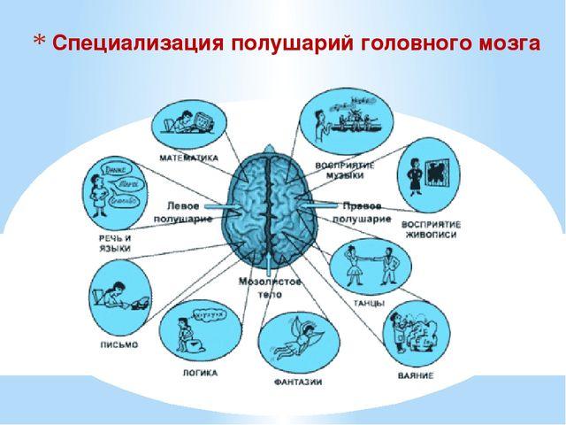 Специализация полушарий головного мозга