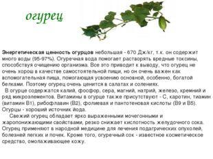 огурец Энергетическая ценность огурцов небольшая - 670 Дж/кг, т.к. он содержи