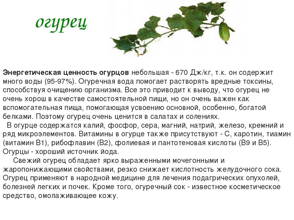 огурец Энергетическая ценность огурцов небольшая - 670 Дж/кг, т.к. он содержи...
