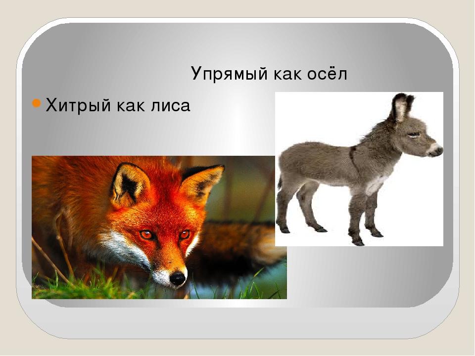 Упрямый как осёл Хитрый как лиса