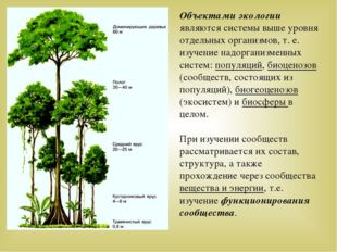 Объектами экологии являются системы выше уровня отдельных организмов, т. е. и