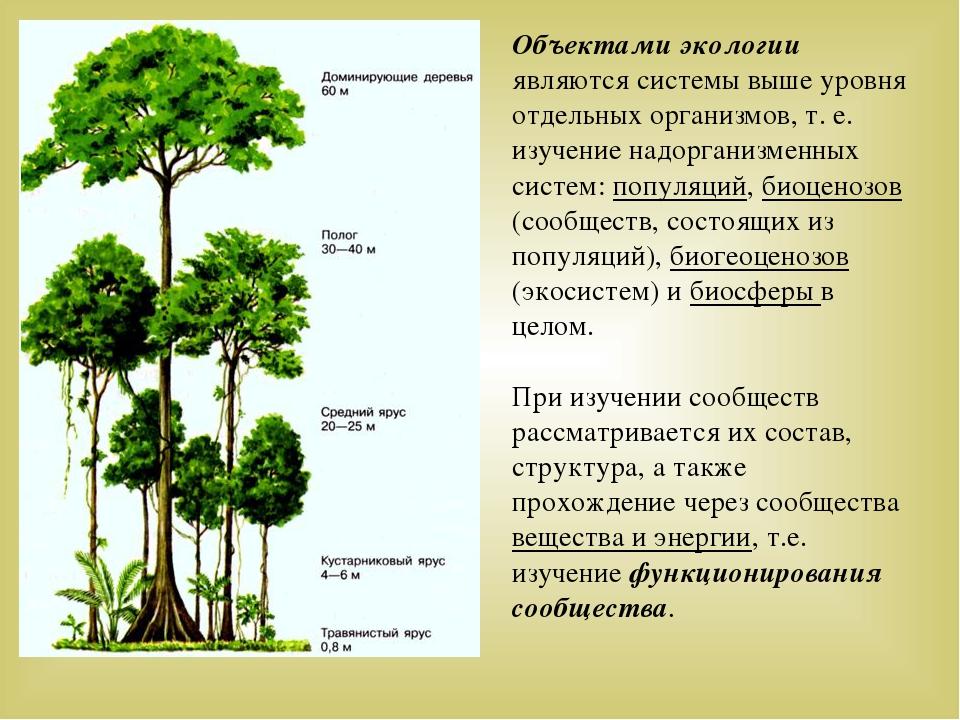 Объектами экологии являются системы выше уровня отдельных организмов, т. е. и...