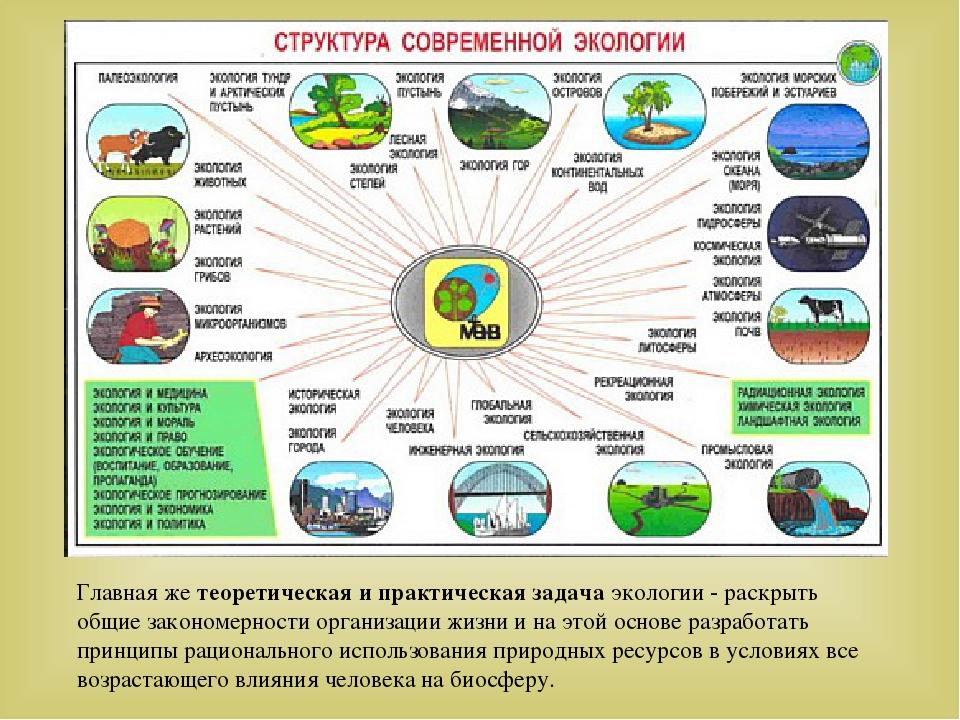 Главная же теоретическая и практическая задача экологии - раскрыть общие зако...