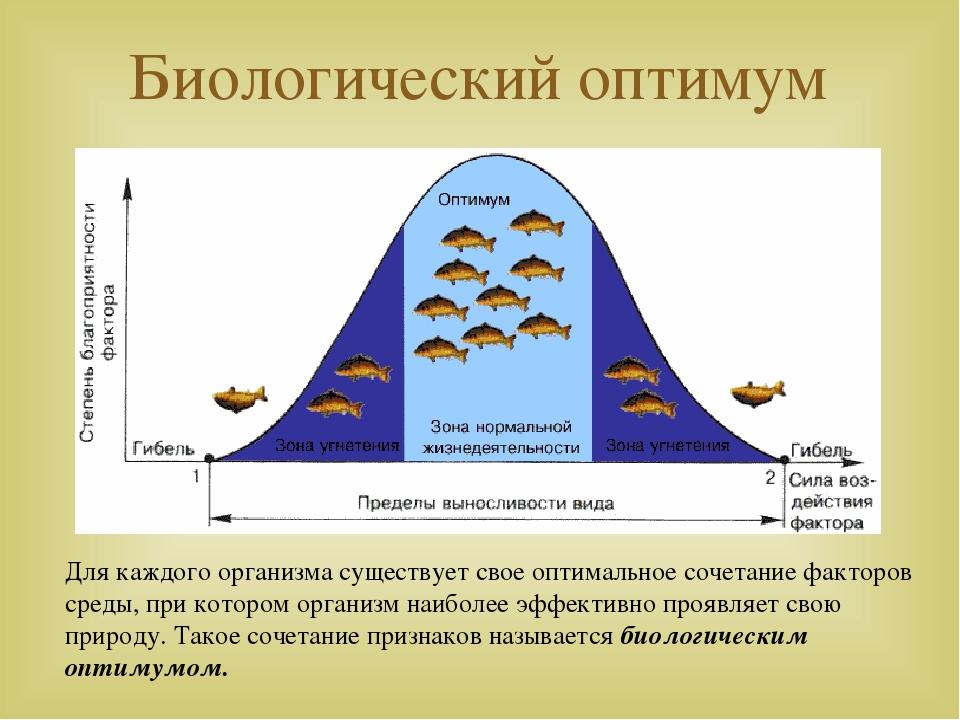 Биологический оптимум Для каждого организма существует свое оптимальное сочет...