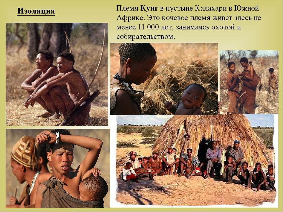 Племя Кунг в пустыне Калахари в Южной Африке. Это кочевое племя живет здесь н...