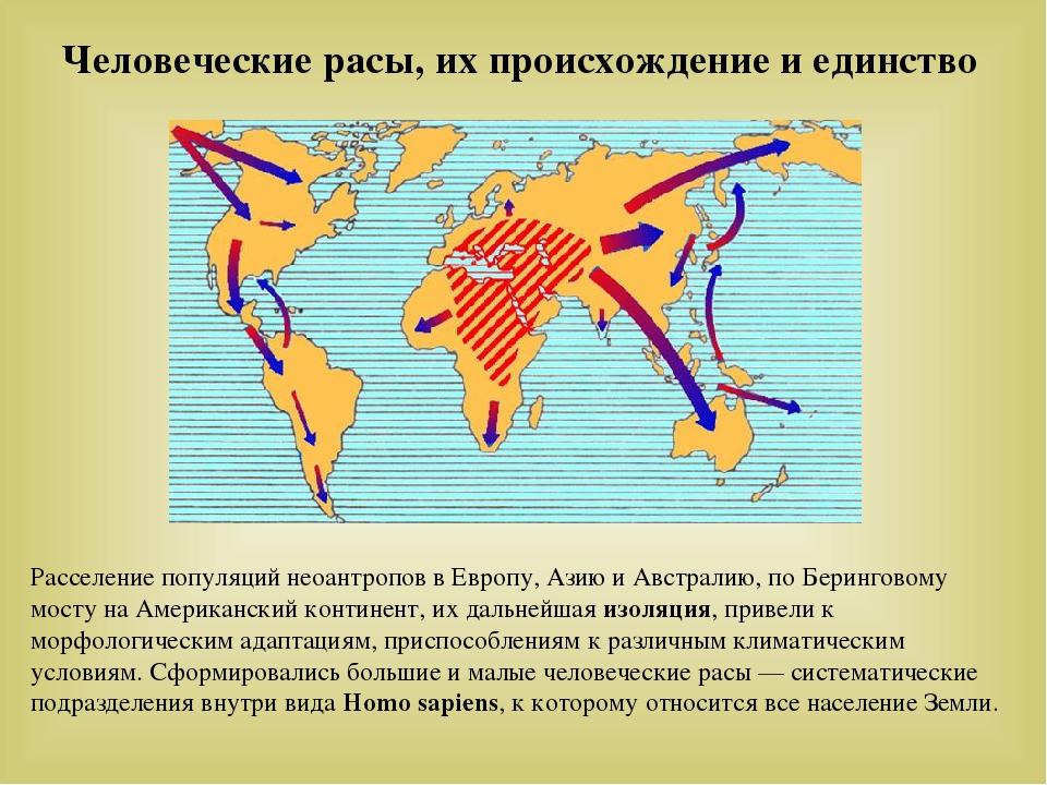 Человеческие расы, их происхождение и единство Расселение популяций неоантроп...